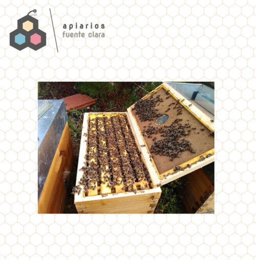 núcleo abejas